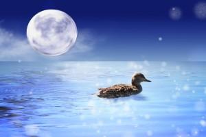 月光浴する鳥