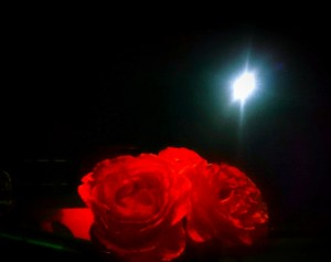 満月と赤いバラ
